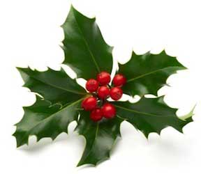 what is this plant called - Why Is Christmas Called Christmas